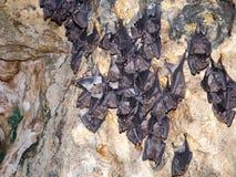 Sleeping bats Royalty Free Stock Photos