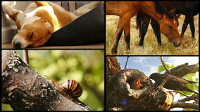 Sleeping beagle, hoses,snail and starling family collage footage stock video footage