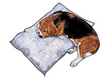 Sleeping beagle Stock Image