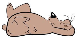 Sleeping bear Royalty Free Stock Image