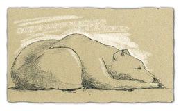Sleeping bear - artwork. Artwork made with pencil and white chalk on sepia-coloured paper vector illustration