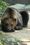 The sleeping bear stock photography