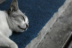 Sleeping Beauty. A Sleeping Cat on A Front Door Step royalty free stock image