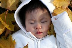 Sleeping Beauty in Autumn. Baby in the leaves on an Autumn day royalty free stock images