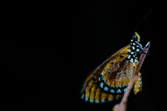 Sleeping beauty. Night macro/closeup shot of a butterfly Stock Images