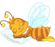 Sleeping bee Stock Photography