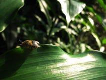 Sleeping bee. On the green leaf Stock Photos