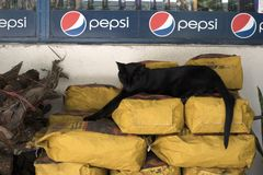 A sleeping black cat lying on bags of coal in a warehouse stock photo