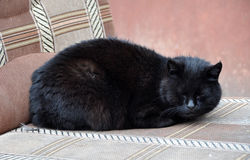 Sleeping black cat Royalty Free Stock Photos