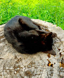 Sleeping Black kitty Stock Images