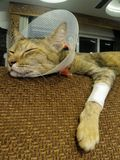 Sleeping broken leg brown cat Royalty Free Stock Images
