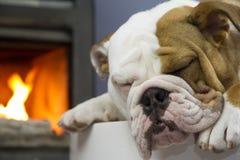 Sleeping Bulldog and fireplace Stock Photos