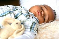 Sleeping bunny. Royalty Free Stock Image