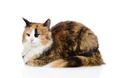 Sleeping calico cat. isolated on white background Royalty Free Stock Photos