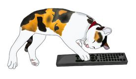 Sleeping calico cat with remote Royalty Free Stock Photos