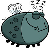 Sleeping Cartoon Fly Stock Photo