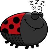 Sleeping Cartoon Ladybug Stock Photos