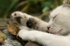 Sleeping cat. A cat sleeping outdoor. Afternoon relax Royalty Free Stock Photos
