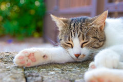 Sleeping cat. A sleeping cat in the sun Stock Images