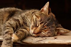 Sleeping cat Royalty Free Stock Photography
