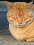 Sleeping cat. Resting orange cat royalty free stock images