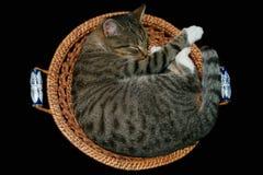 Sleeping cat. Little sleeping cat in the scuttle Stock Image