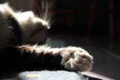 Free Sleeping Cat Royalty Free Stock Photos - 13333988