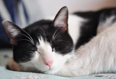 Free Sleeping Cat Stock Photography - 14376282