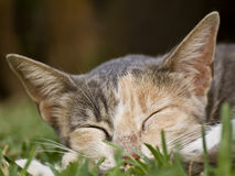 Sleeping Cat. Portrait of a cat sleeping on the grass Stock Image