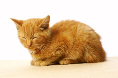 Sleeping cat Stock Image
