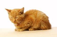 Sleeping cat. Isolated on white background Stock Image