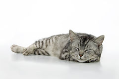 Sleeping cat. Stock Photos