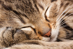 Free Sleeping Cat Stock Images - 17912674
