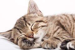 Sleeping Cat Royalty Free Stock Photo