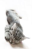Sleeping cat. Retro black and white style Stock Photography