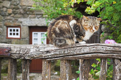 Sleeping cat. Cat sleeping on a wooden fence Stock Images
