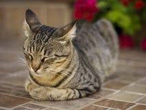 Sleeping Cat. A Cat Sleeping on Terrace. Shallow Depth of Field Royalty Free Stock Photos