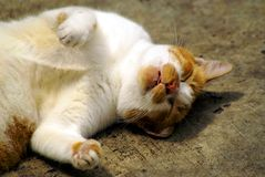 Sleeping cat. A white and speckled yellow cat sleeping nicely on a  concrete floor Stock Images