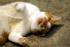 Sleeping cat Stock Images