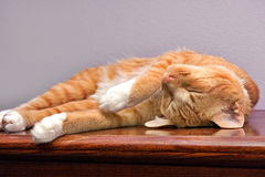 Sleeping cat. Brown cat sleeping on his back. Completely relaxed Stock Photo