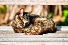 Sleeping Cat stock images