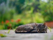 Sleeping cat. Cat sleeping on patio in front of garden Stock Images