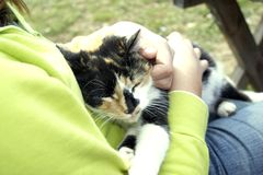 Sleeping Cat. A cat sleeps at the lap of teen girl Royalty Free Stock Images