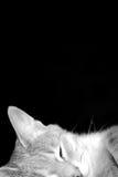 Sleeping Cat Stock Photos