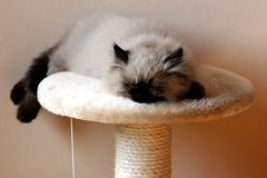 Sleeping Cat. My Cat Royalty Free Stock Photos
