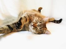 Sleeping cat. Onthe house Royalty Free Stock Photography