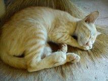 Sleeping cat. A sleeping cat Royalty Free Stock Photo