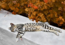 Sleeping cat in autumn. After the summer a cat is relaxing and taking the autumn rhythm stock images