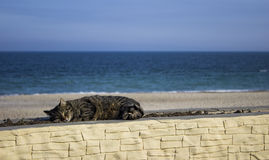 Sleeping cat with background of the sea , sunset landscape Royalty Free Stock Photography
