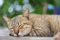 Sleeping Cat. Beautiful Bokeh in Background Royalty Free Stock Photos